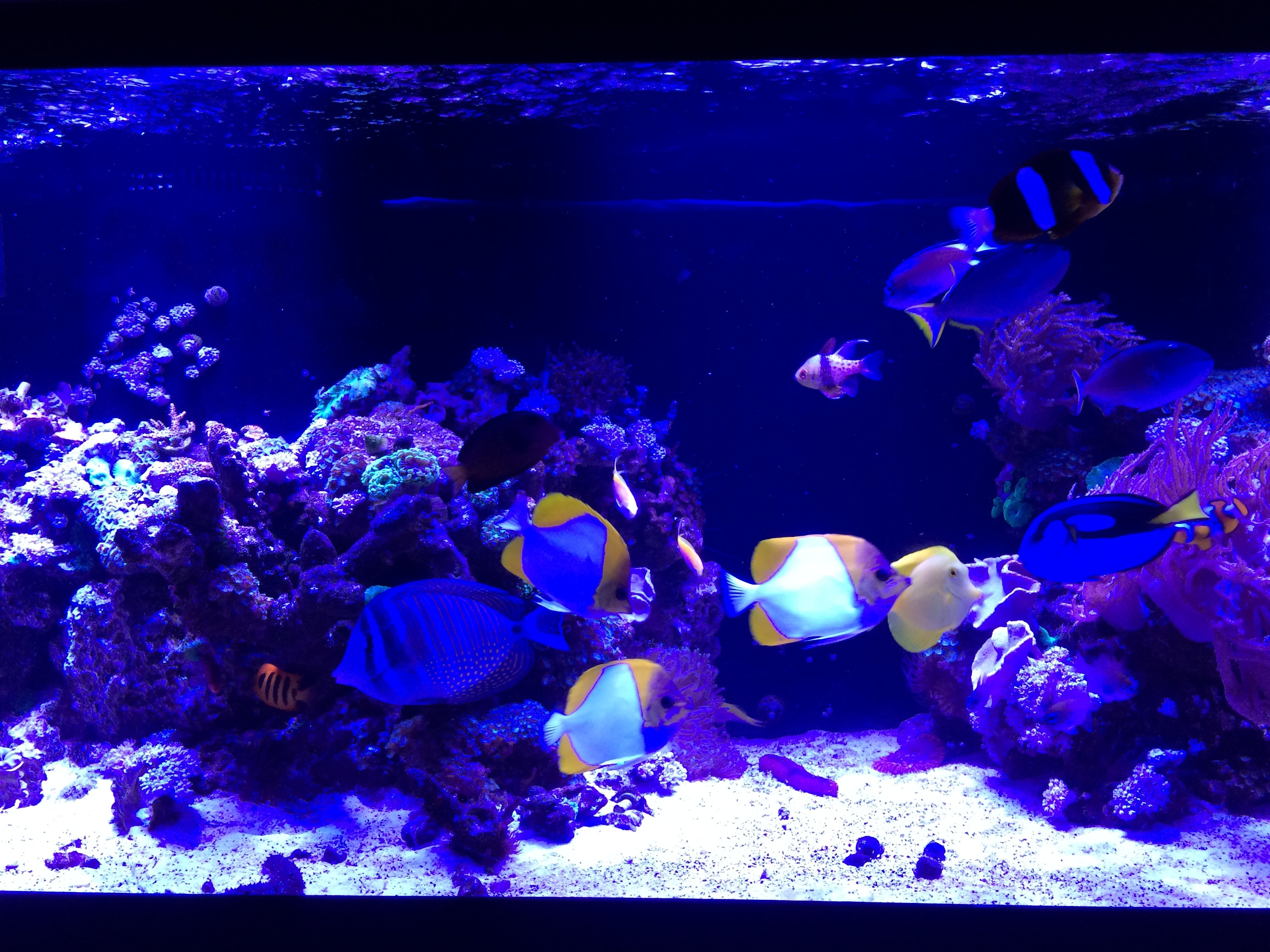 180 Reef with Butterfly