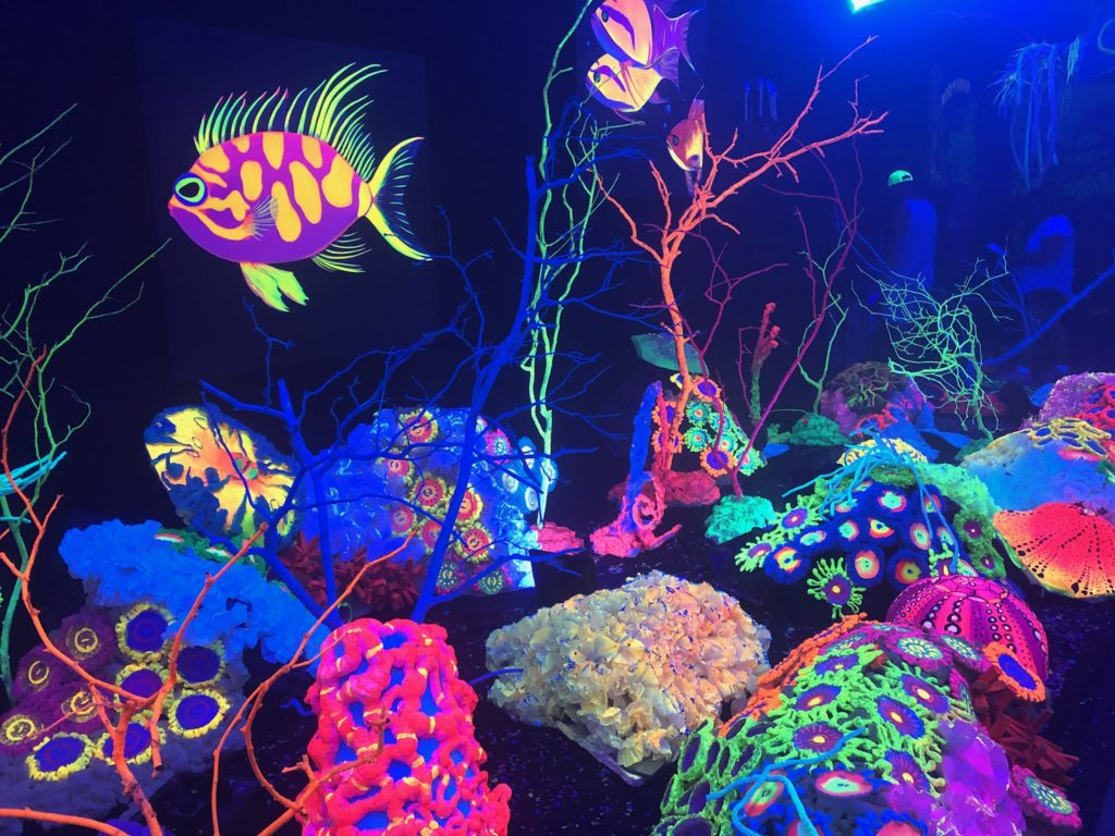 Glow display at aquashella