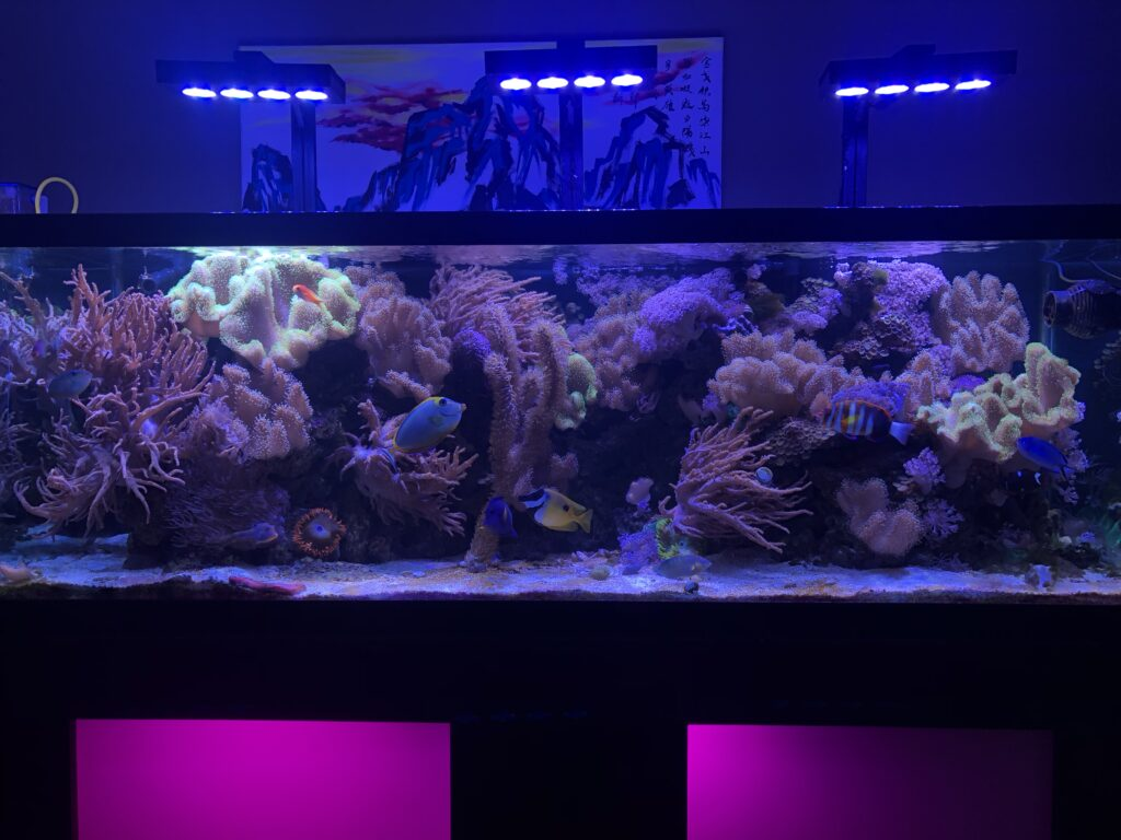 180 gallon tank with hydra 52