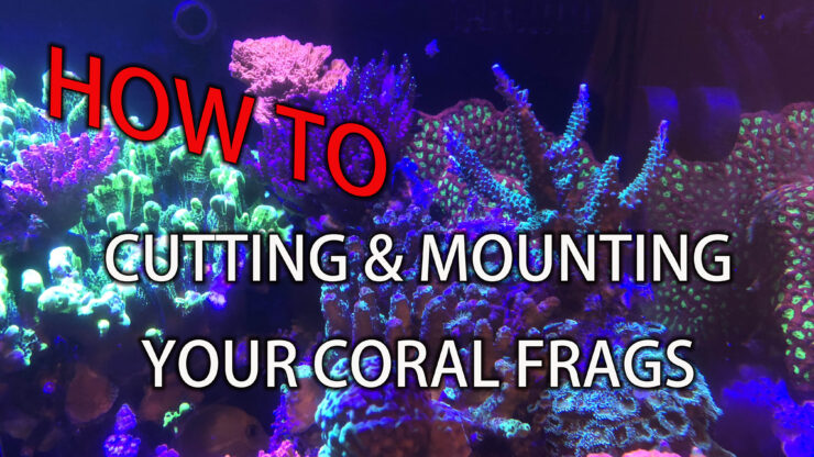 how to cut and mount sps corals