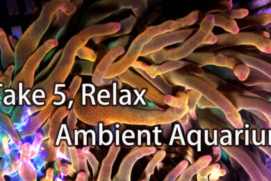 take five relax with aquarium ambient